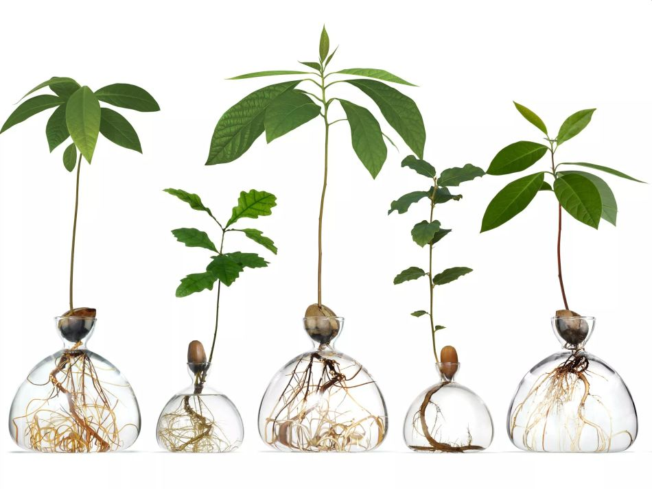 Elegant Avocado Vase by Ilex Celebrates Growth of Plants Both Ways