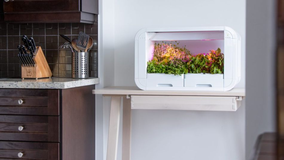 tinyFarm is Fully Automated Modular Mini-garden for Urban Dwellers