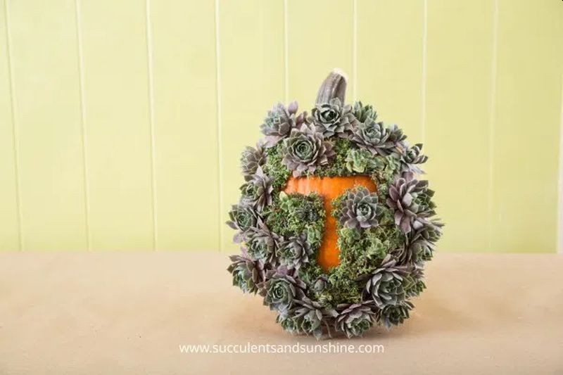 DIY Succulent Monogram Pumpkin Will Add Festive Vibes on Halloween