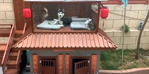 Man Builds a Luxury Villa for His Dogs Complete with Pool, Spa, and Cinema