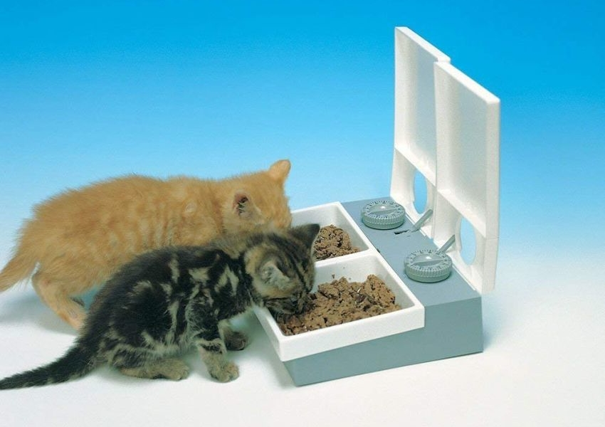 This is Simplest Automatic Pet Feeder You can Buy on Amazon