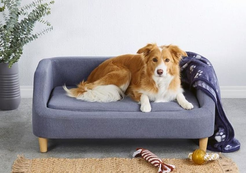 Aldi's Pet Sofa Beds will be Available Again After 21 March