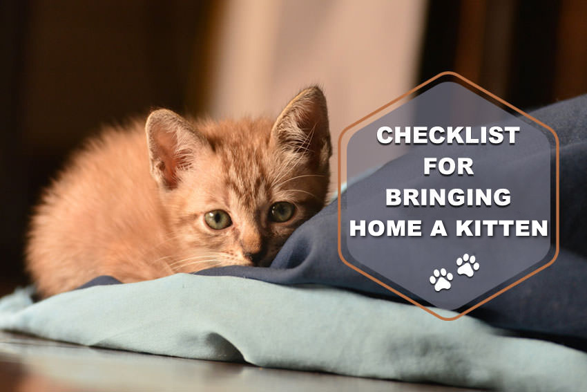 Things-to-consider-before-bringing-home-a-kitty