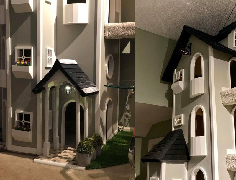 Man Builds High-Rise Towers for His Cats and Gets Viral on Social Media
