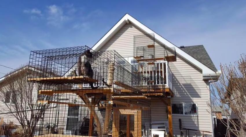 Edmonton Couple Builds Purrfect Catios for Felines