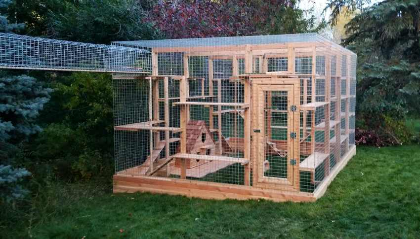 Edmonton couple builds cat Enclosures