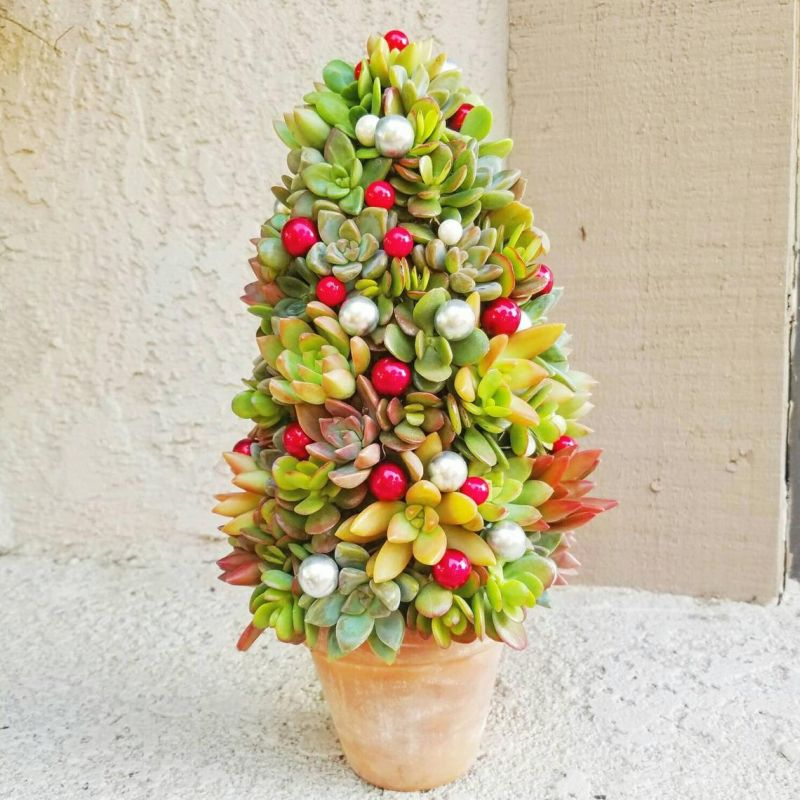 Succulent Christmas Trees are a Holiday Classic You May Know Before Now