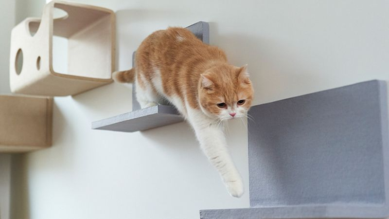Nyanpeki Cat Wall can be Personalized According to Cats