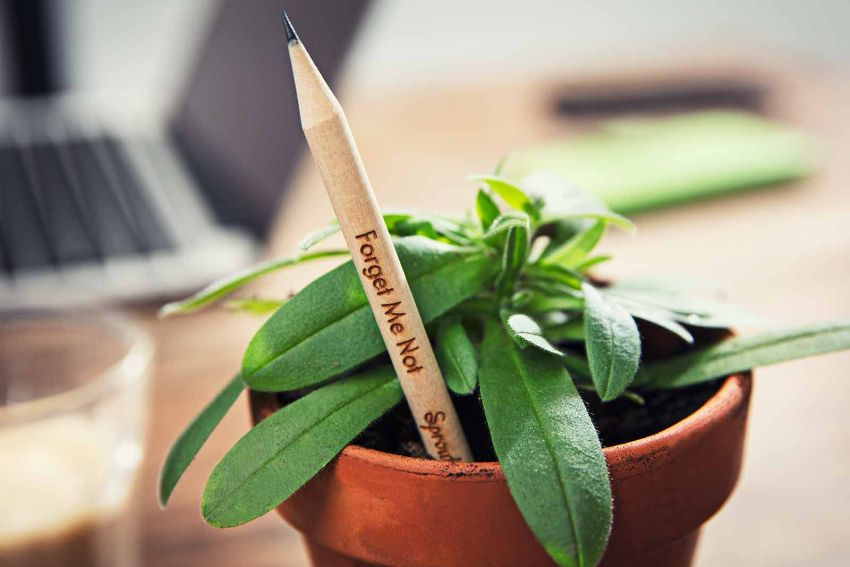 Sprout World Pencil Grows into Plants, Flowers and Vegetables