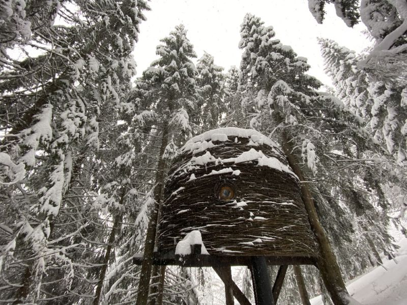 This Unique Treehouse in Mont Blanc, France Looks Like Bird's Nest