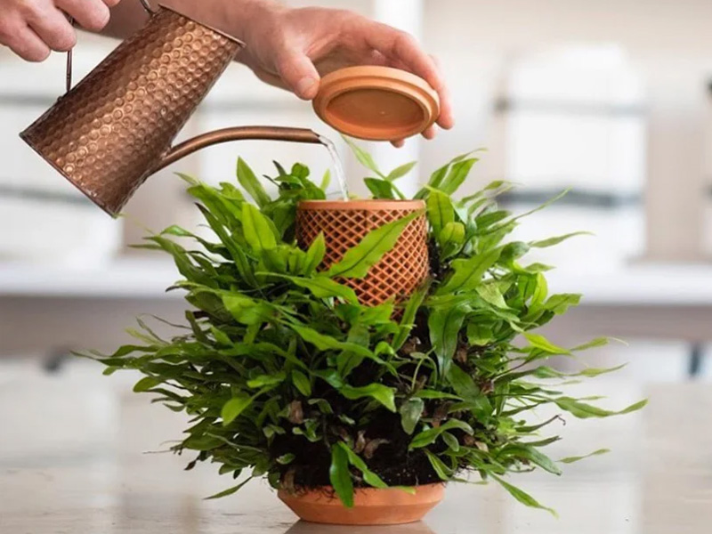 Inside out terraplanter, an optimal solution for plants to thrive indoors