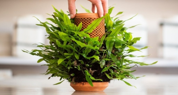 Inside out Hydroponic Terraplanter makes Planting Seem Effortless