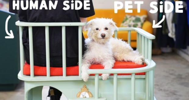 DIYer Builds Creative Chair that Serves Both, Humans and Pets