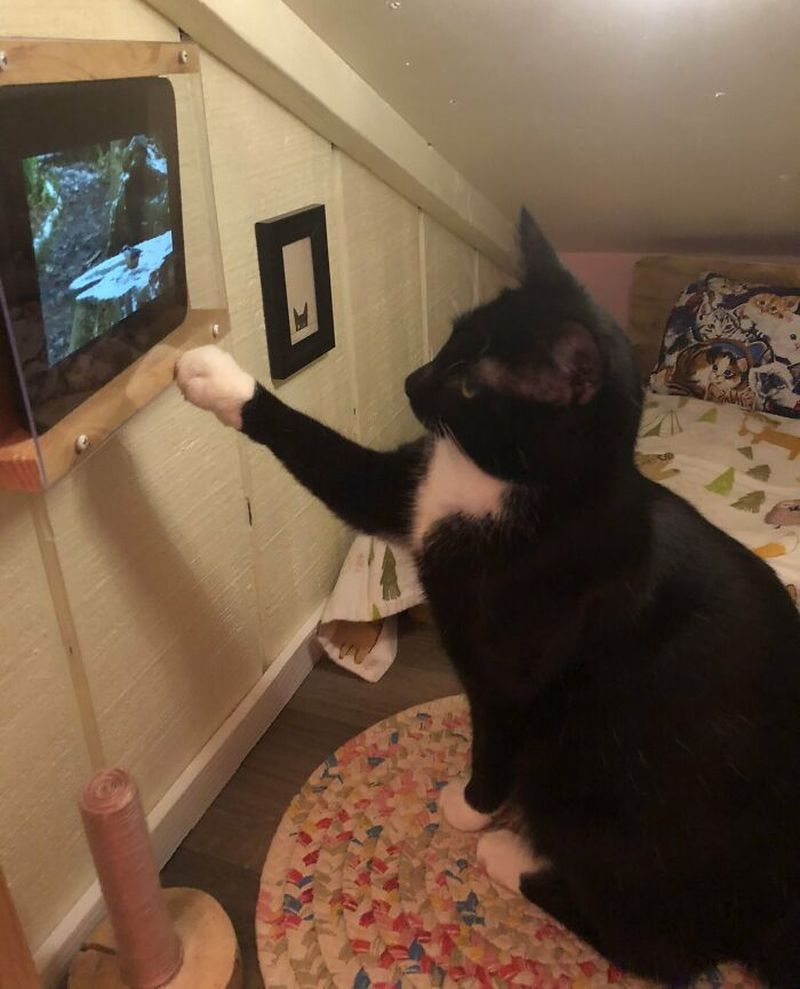 Man Transforms Empty Space in his House Into a Stunning Cat Bedroom With TV