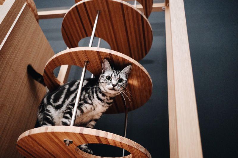 Neko Goten Luxurious Cat Tower