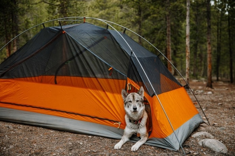 King Peak Tent makes camping fun with separate compartment for pooch.