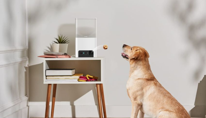 Newly Launched Petcube Bites 2 Lite has Smart Cam with Treat Dispenser