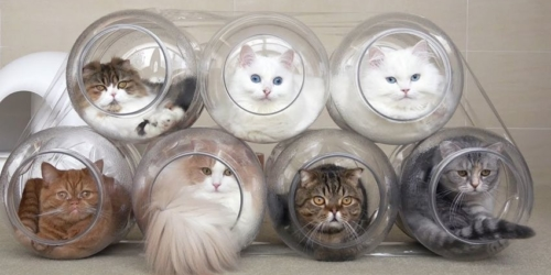 Women builds Plastic Jars as Cat Capsule Hotel for her beloveds